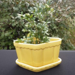 Yellow Diamond Shaped Pottery Vintage Planter - Attached Saucer